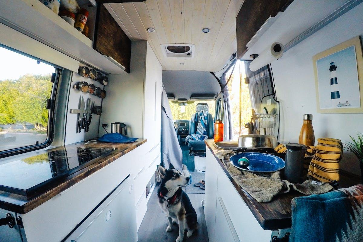 Dog in the van